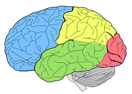 the brain is very complex and our most important organ