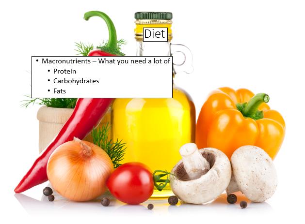macronutrients in weight loss plan