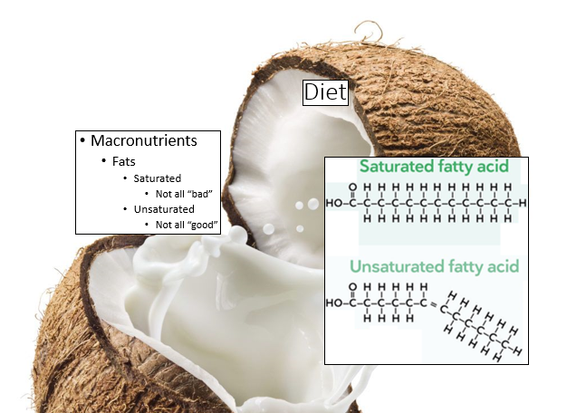 fats in weight loss plan