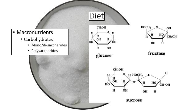 carbs and sugars
