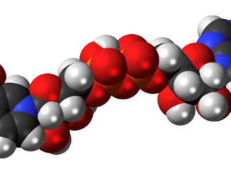 NR molecule
