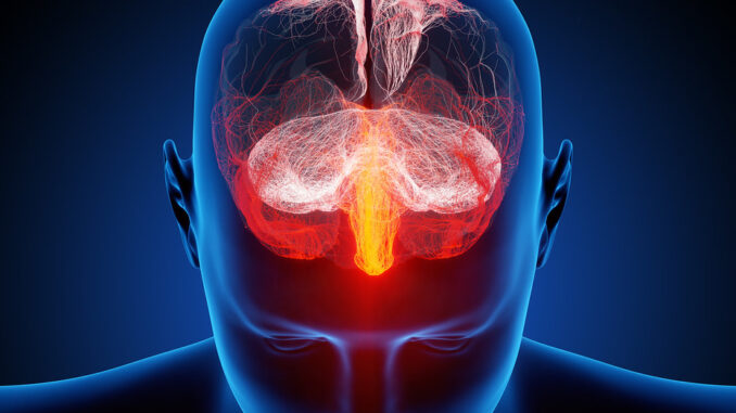 proprioceptive system in the brain